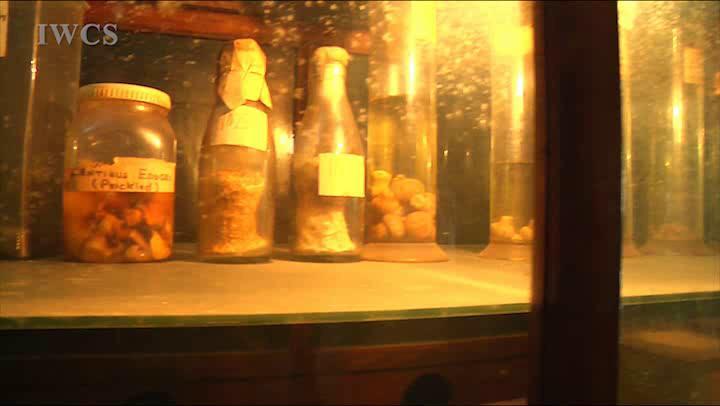 参观印度林业研究中心(六)——森林病理展览馆