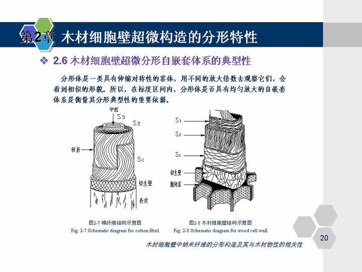 (1)木材细胞壁超微构造的分形特性.