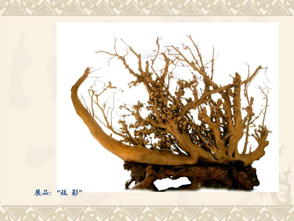 古木分类,鉴赏以及产业发展