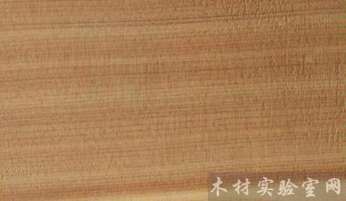 orientalis(侧柏) - 木材真好