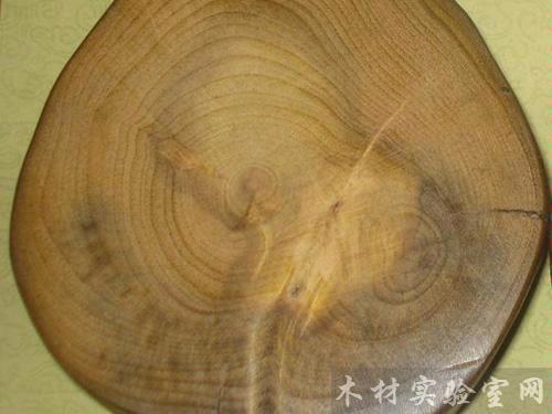 桢楠树木材切面图