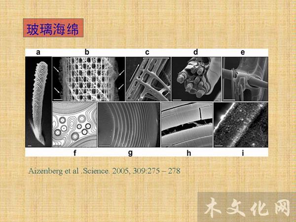 竹材韧性之源: 两相复合材料结构及多级弱界面机制
