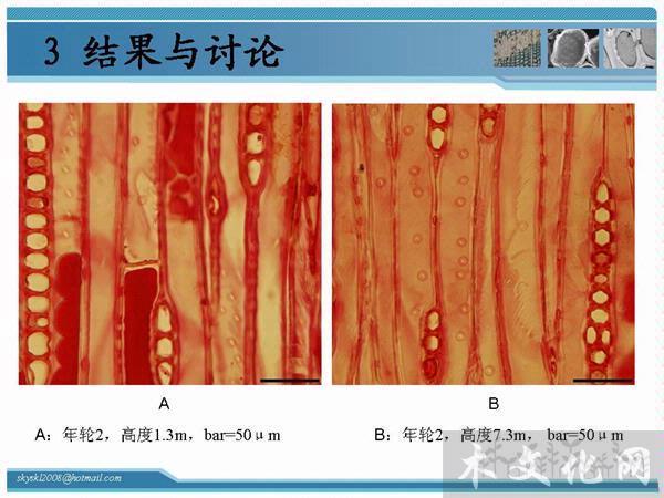 中国杉树剪纸步骤