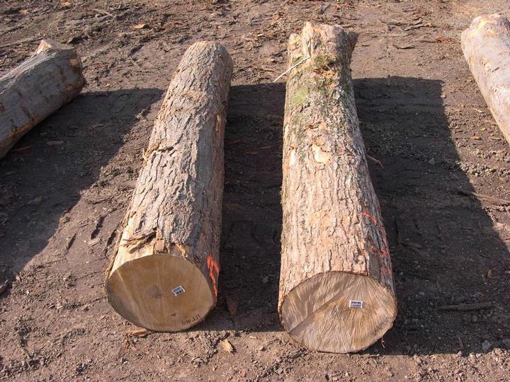 是木材硬度适中,木质致密,花纹美丽,光泽良好,而且木纹中常现鸟眼状或
