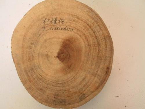 木头横切面