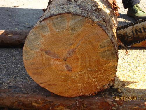 储存中的木材以及木制品,部分树种如杨木产生的霉菌变色非常严重,一般