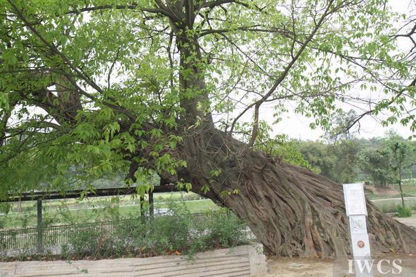 广东省木材及木制品质量